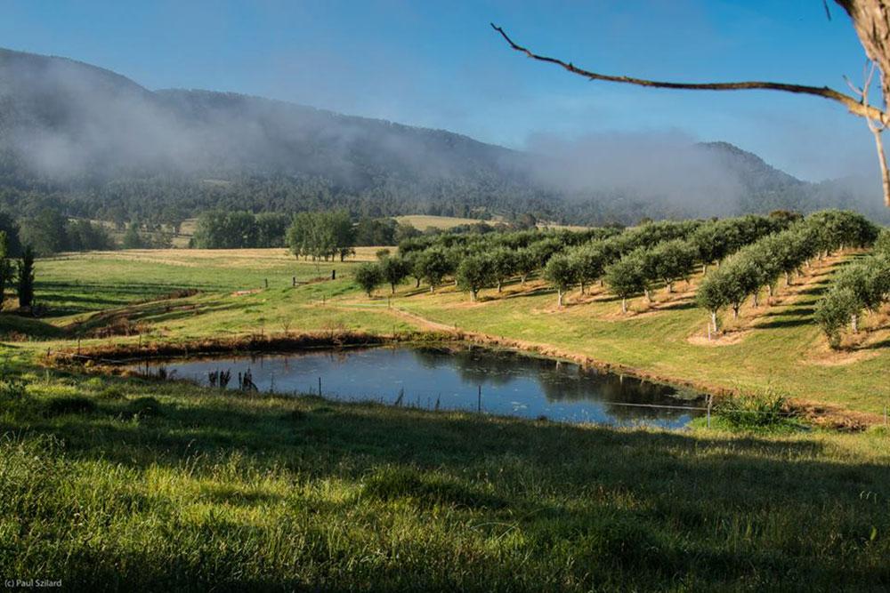 Bunna Bunno Olive Grove, Hunter Valley