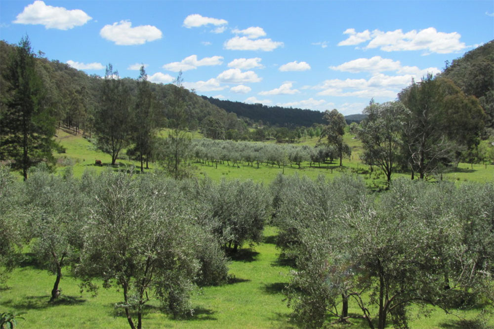 Laguna Olives, Hunter Valley